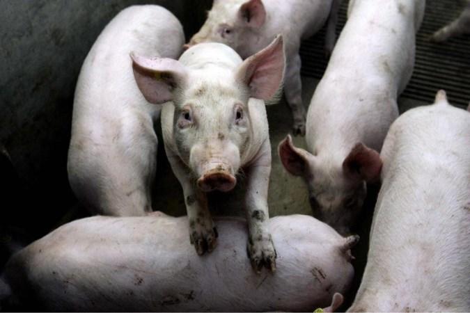 Rechtbank wuift bezwaren tegen mestfabriek in Grubbenvorst weg