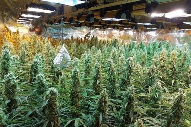 Politie rolt wietplantage met honderden planten