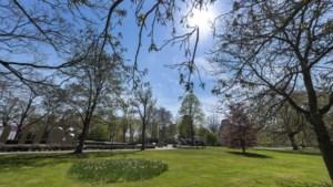 Burgemeester Roermond plant coronaherdenkingsboom