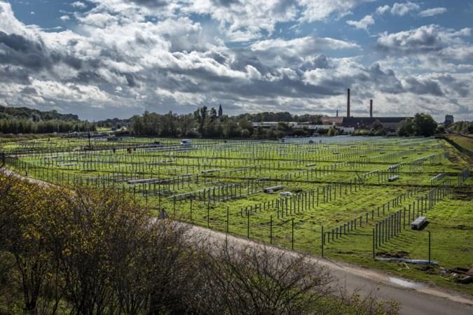 Zonnepark langs A73 in Tegelen wekt straks voldoende stroom op voor 1753 woningen