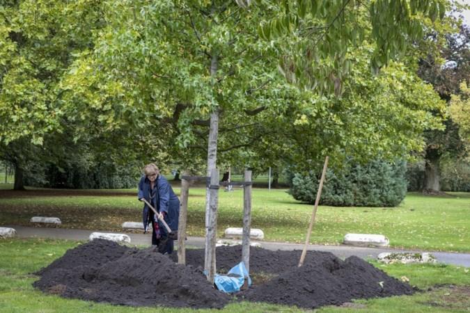 Coronaherdenkingsboom geplant: Burgemeester Donders pleit voor blijvend gevoel van saamhorigheid