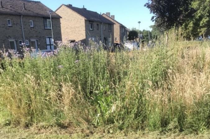 Veel klachten over staat van parken, groenstroken en prullenbakken in Stein