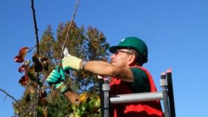 Jonge fruitbomen snoeien tijdens snoeicursus in Simpelveld