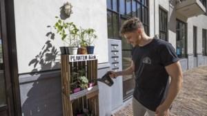 Plantenbieb in Heerlen overwintert in de Stationshuiskamer
