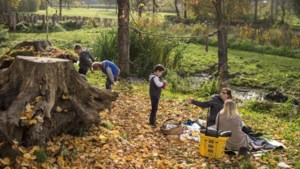 Gekapte bomen Stadspark Sittard opnieuw gebruikt