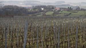 College in Vaals positief over de plannen om wijngaard Sint Martinus in Vijlen ondergronds uit te breiden