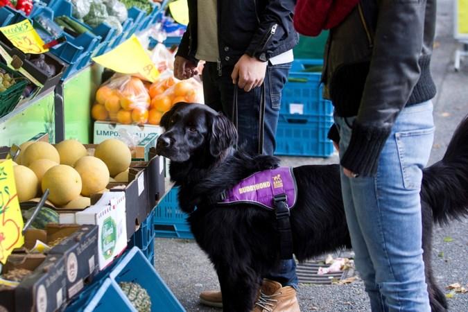 Getraumatiseerde Sylvana (18) schrijft een dichtbundel en bakt wafels om het geld voor een hulphond bij elkaar te krijgen