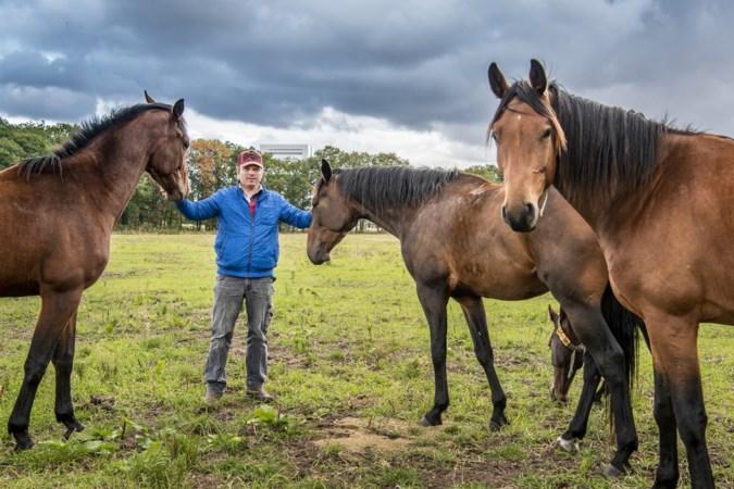 Paardenfokker hoeft grond voor golfbaan in Venlo nog niet af te staan