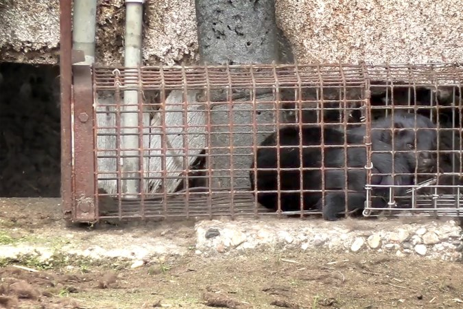 Animal Rights kritisch over aanpak corona bij nertsenbedrijven