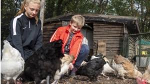 Willy en Gertie uit Wellerlooi moeten de kippenstal van hun kleinkinderen weghalen