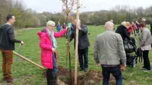 Plantdag afgelast: geen nieuwe bomen in Reuvers Burgerbos