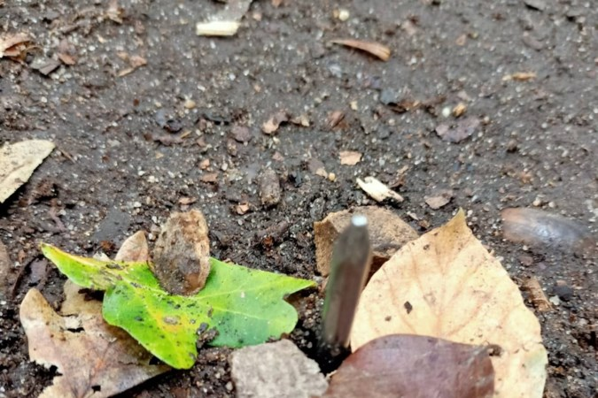 Hardloper ontdekt op ongelukkige wijze spijkers in grond van Landgraafs bos