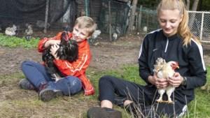 Petitie gestart om kippenstal in Wellerlooi te behouden