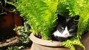 Kattenpoep in de tuin: moet je dat pikken?