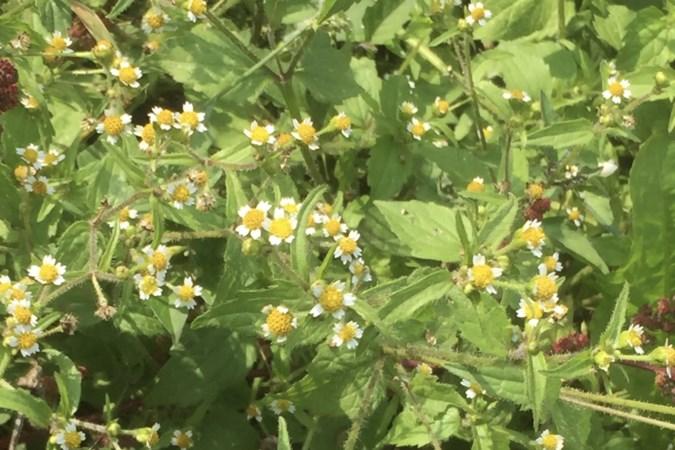 Mens en Natuur: Hoe kleine plantjes soms heel ver van huis kunnen belanden