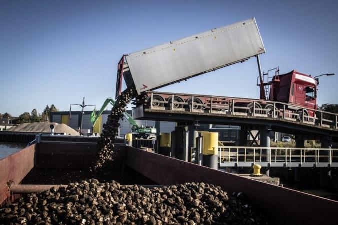 Transport suikerbieten per schip scheelt 14.000 vrachtwagens over de Limburgse snelwegen