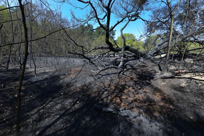 Van blijven naar toch evacueren: hoe de mindset tijdens de Meinwegbrand kantelde