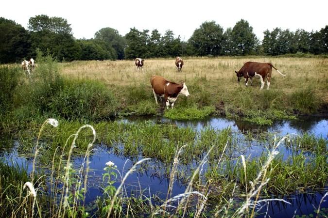 Zorgen over overschrijdingen meststoffen in Limburgse beken