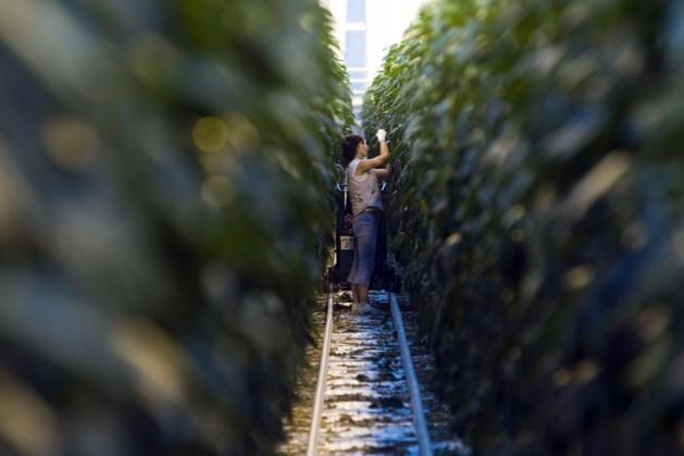 Telersvereniginen Noord-Limburg pakken zich samen om afval uit de tuinbouw een nieuwe bestemming te geven