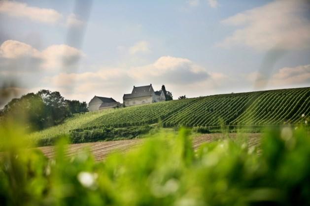 Drie maal goud voor witte wijnen van Maastrichts landgoed De Apostelhoeve