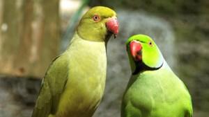 Nieuw Faunabeheerplan Limburg: extra aandacht voor terugdringen exotische dieren in het wild