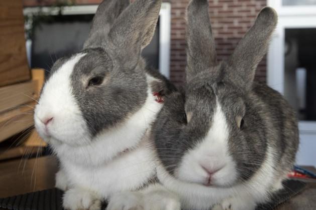 Roermondse Pieter en Martijn leven als konijn in Frankrijk