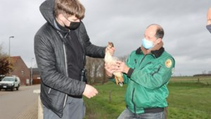 Natuurhulpcentrum eist dat jager operatiekosten neergeschoten vogel betaalt