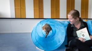 Hoe honden en cavia's kinderen met problemen kunnen helpen: 'Het zegt iets over jou als een hond niet wil meewerken'