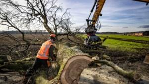Gevaar voor vallende takken of omvallen: Beekdaelen laat 328 bomen kappen