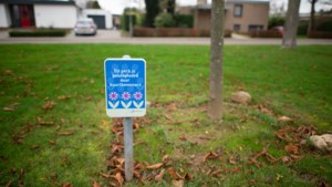 Meer dan driehonderd vrijwilligers op zo'n zestig locaties in Sittard-Geleen onderhouden geadopteerde perkjes in hun buurt