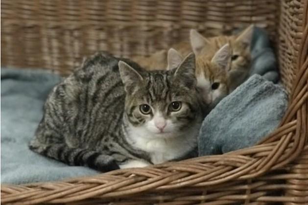 Dier van de week: katjes