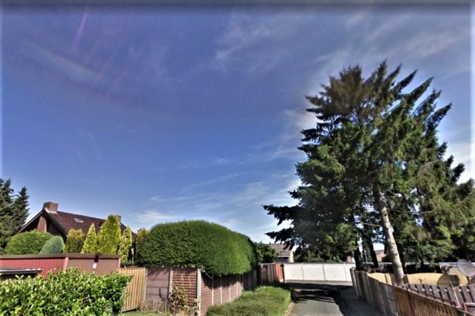 Heerlenaar weigert hoge bomen te kappen, 'ze stonden er al toen ik hier kwam wonen'