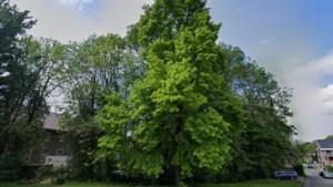 Rechter beslist dat bomenkap bij Gemmaklooster in Sittard voor extra parkeerplekken niet opgeschort hoeft te worden