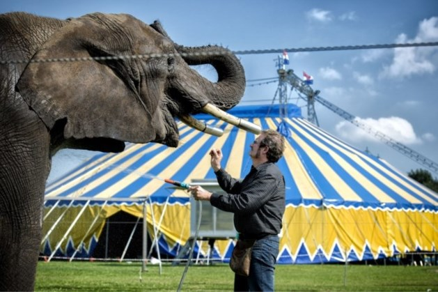 Comité Dierennoodhulp: 'Buba moet naar olifantenopvang in Frankrijk'