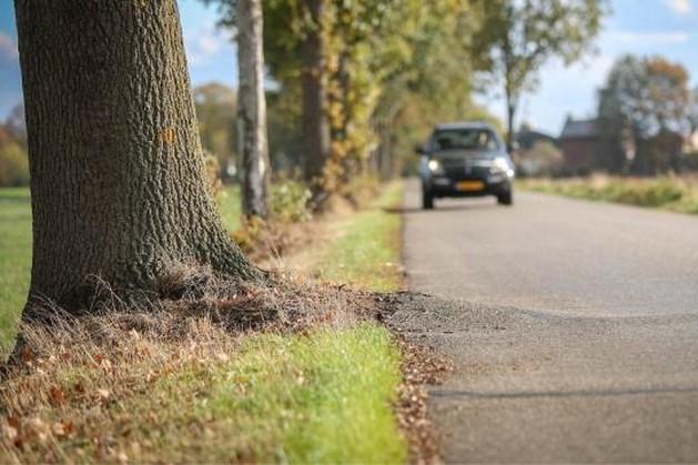 Gemeente Bergen bindt strijd aan met boomwortels