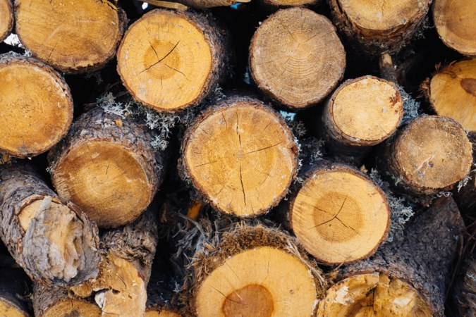 Omwonenden tekenen protest aan, maar van rechter mag bomenkap voor extra parkeerplaatsen in Sittard doorgaan
