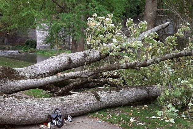 Maastricht kapt 41 'risico-bomen' in het Stadspark en omgeving