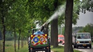 Minder stormen en preventieve bestrijding: Venray had minder last had van de eikenprocessierups