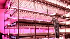 Universiteit Maastricht met BASF op zoek naar slimme technieken om voedselproductie duurzaam te maken
