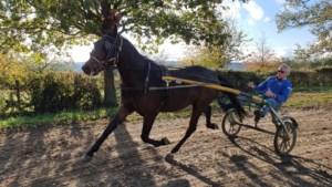Toppikeurs komen graag naar 'Petit Normandië' van Jean Huls in Noorbeek