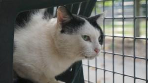 Dier van de Week Op de Smakterheide: kat zoekt boer!