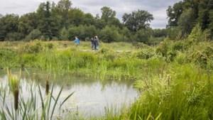 'Oude plantensoorten keren terug in het Maaspark'
