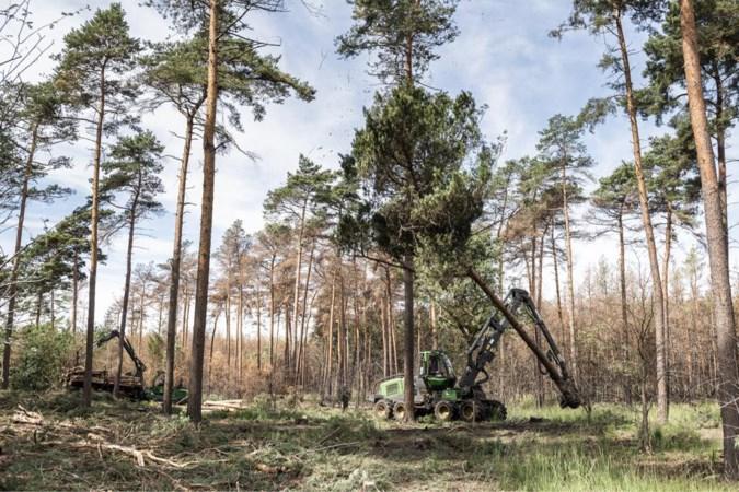 Staatsbosbeheer vervangt bomen in de Meinweg en het Leudal