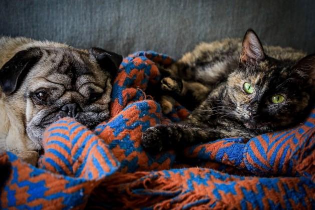 Tientallen honden en katten in Nederland hadden corona