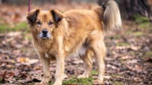 Straathond Billy kreeg in Landgraaf een nieuwe kans: 'Hij was letterlijk en figuurlijk gebroken'