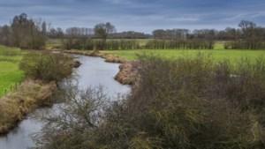 Gemeentes Bergen en Gennep willen Maasheggen aan Limburgse kant herstellen en Unesco-status geven