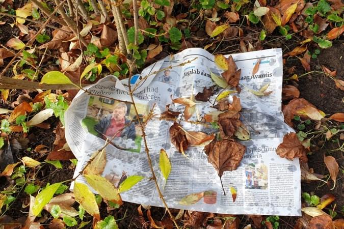 Ergens in Susteren: kiezen tussen een schijtende duif en een natte krant