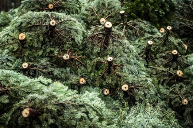 Kerstbomen worden komende week opgehaald in kernen Roerdalen
