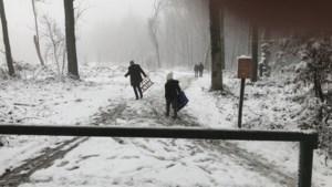 Race tegen de dooi: snel sleeën in het Vijlenerbos voor de sneeuw weer is verdwenen