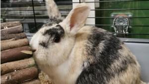Twee konijnen in een boodschappentas gedumpt in Roermond